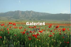 Galerie 4 Armenian nature